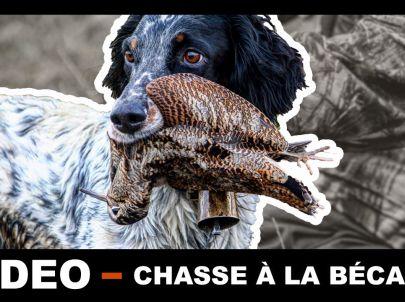 Chasse à la bécasse en Bretagne avec toute l'équipe de Frères de chasse. Chasse avec deux Setters.