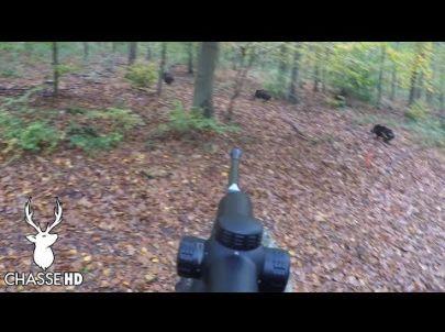 Chasse en Battue - Comment louper des sangliers à 10 mètres !!! Chasse HD