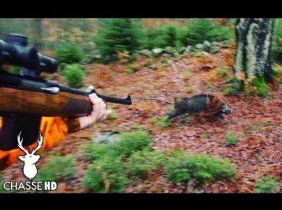 Chasse aux Sangliers en Battue au Poste - Chasse HD