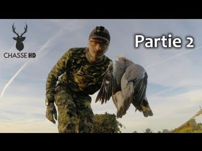 Très bon Spot de Chasse aux Pigeons Ramiers - Partie 2 - Chasse HD
