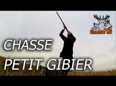 Belles chasses aux petits gibiers - Chiens d'arrets - Chasse HD