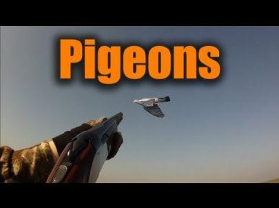 Chasse aux Pigeons - Ouverture 2013 - Caméras embarquées !