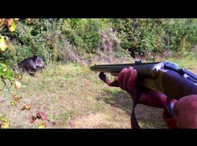 Chasse Sangliers Chevreuils - Belle Ouverture
