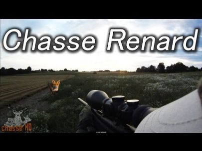 Chasse du renard à l'approche - Été 2015 -Chasse HD