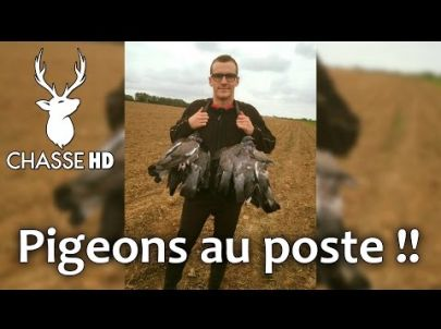 Chasse du pigeon aux formes - Multi-caméras - Chasse HD