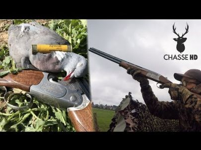 Ouverture 2017 - Chasse du pigeon aux formes - Chasse HD