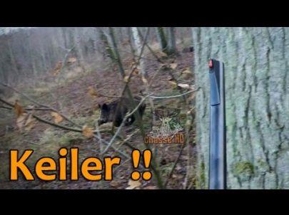 Tir d'un Keiler de 124 kilos en Battue + Cervidés - Chasse HD