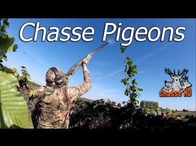 Ouverture de la chasse exceptionnelle aux Pigeons - Multi-Caméras - Chasse HD