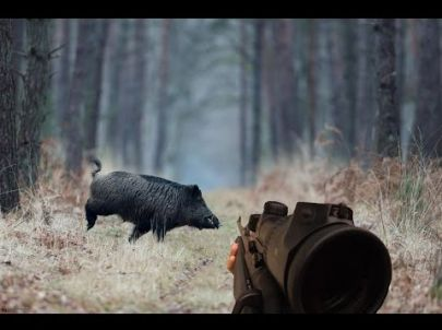 Chasse - Grande battue de sangliers - GoPro - Chasse HD